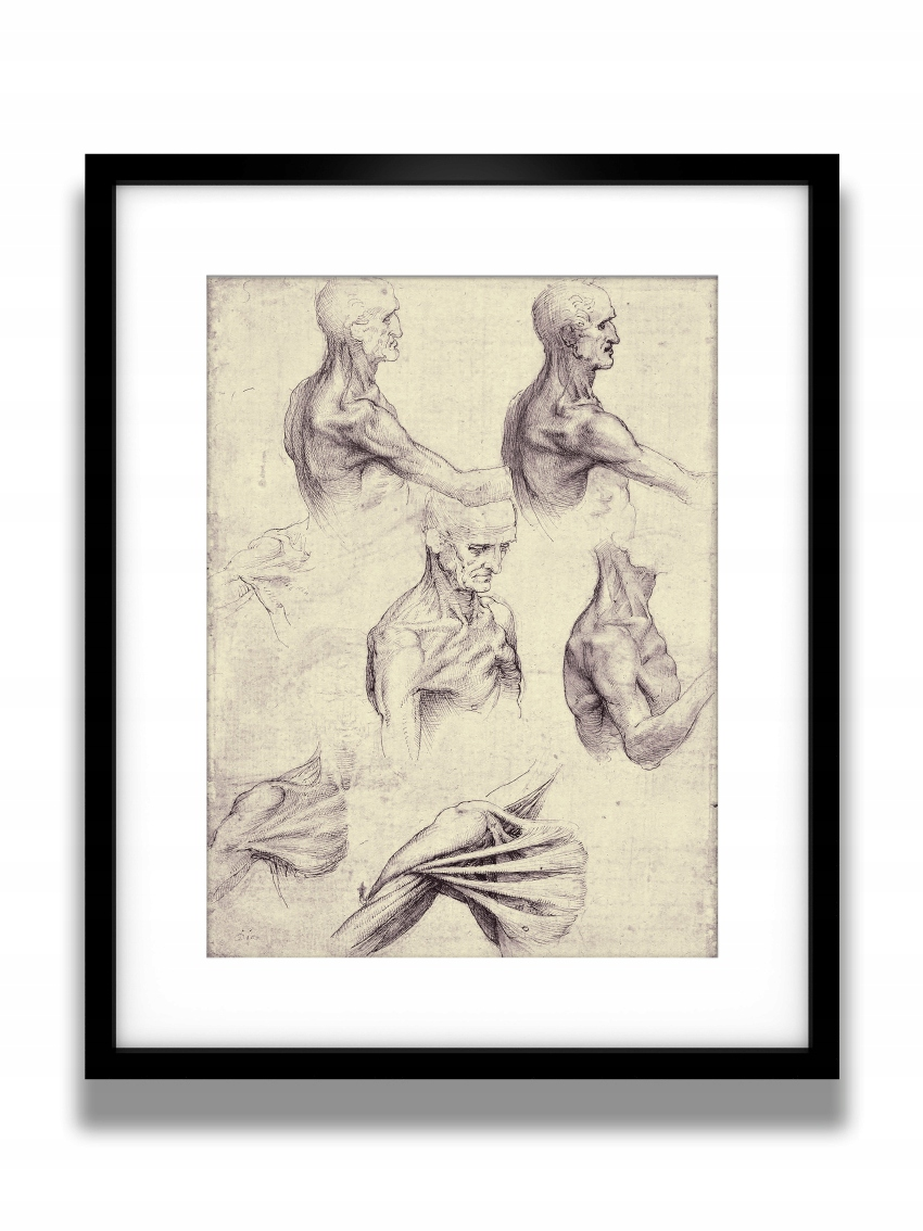 Ryciny Szkice Anatomiczne Leonardo Da Vinci 40x50