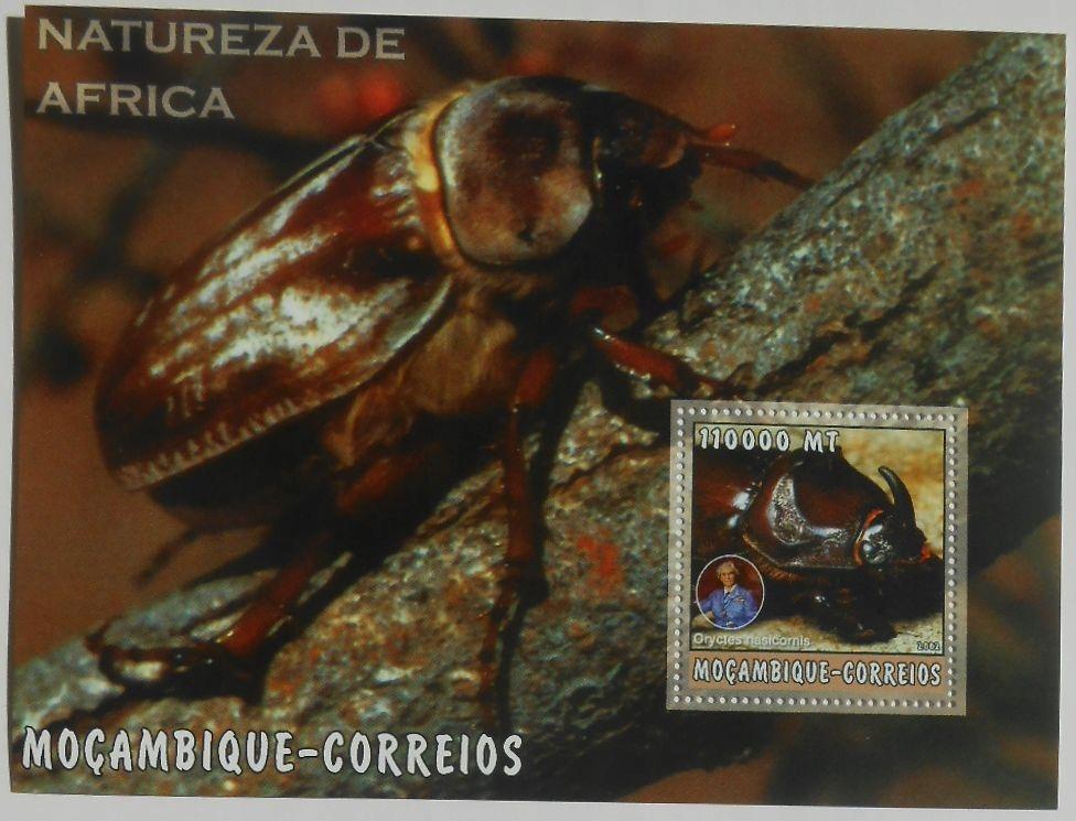 FAUNA AFRYKAŃSKA Rohatyniec owady Mozambik MOZ2276