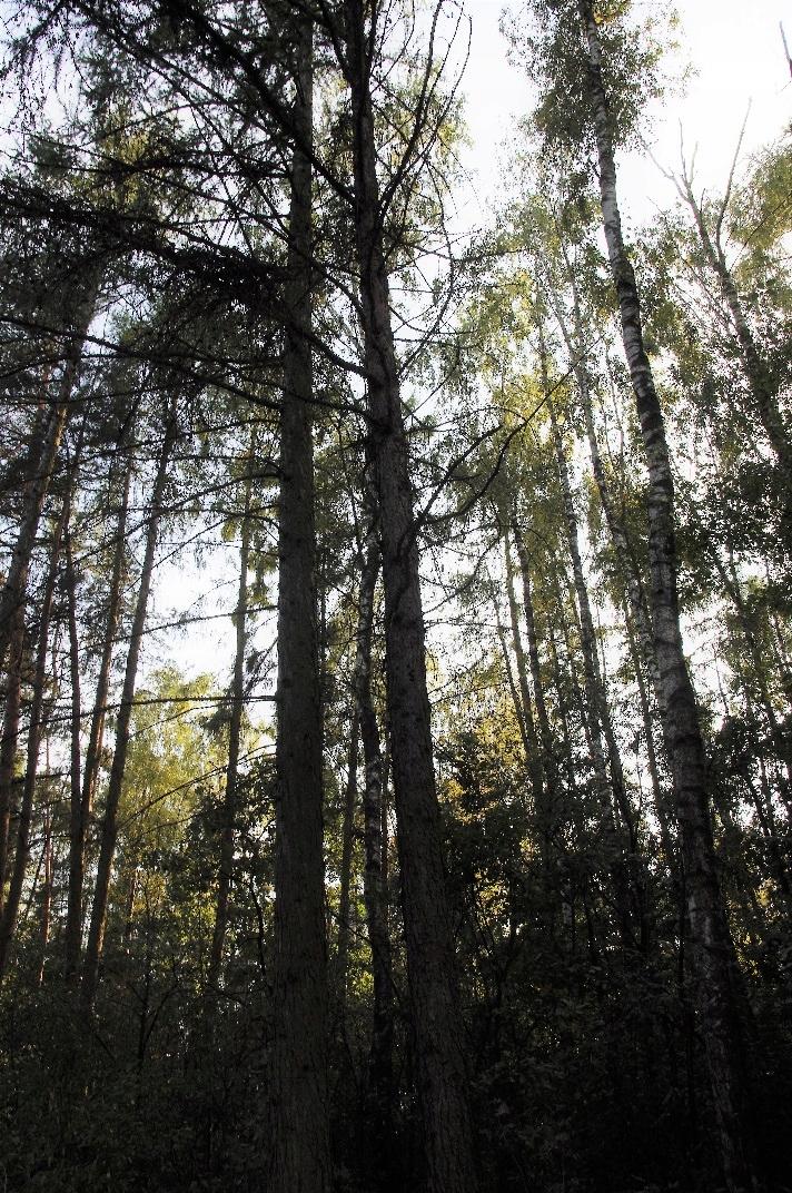 Las 1,49 ha Obniże
