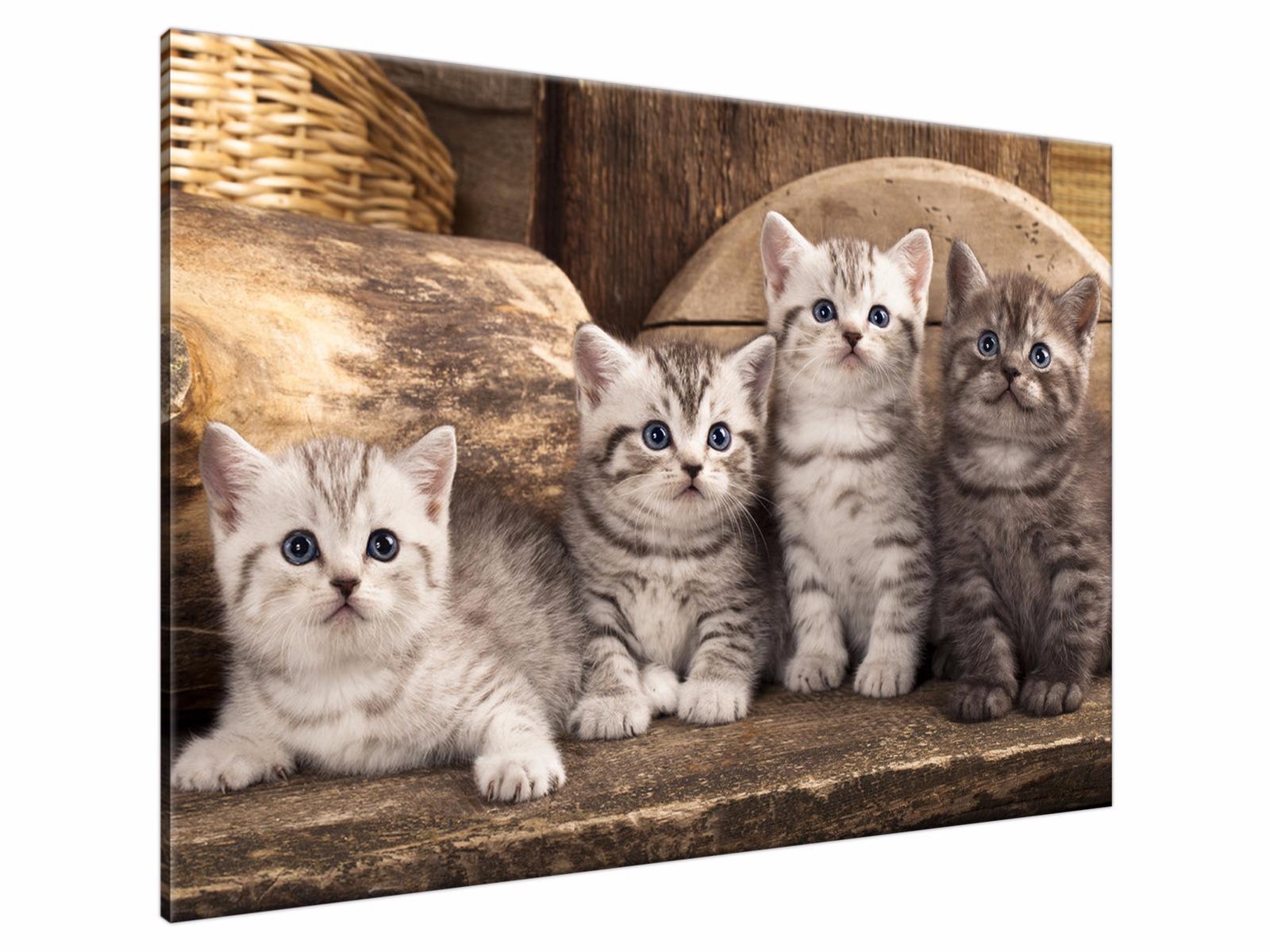Obraz Kot Koty 100x70 Obrazy Do Pokoju Dziecięcego 6639181921