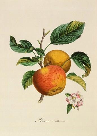 1846 r. OWOCE reprint XIX w grafiki
