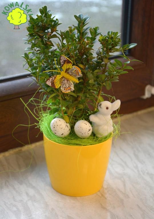 Stroik Wielkanocny Jajko Zając Kolorowe Doniczki