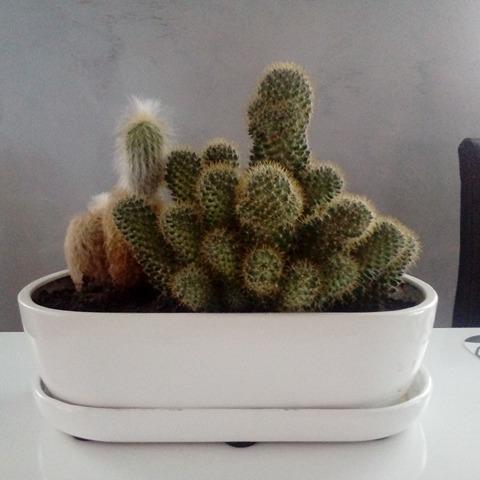 Duży Kaktus Doniczka Ceramiczna Biała