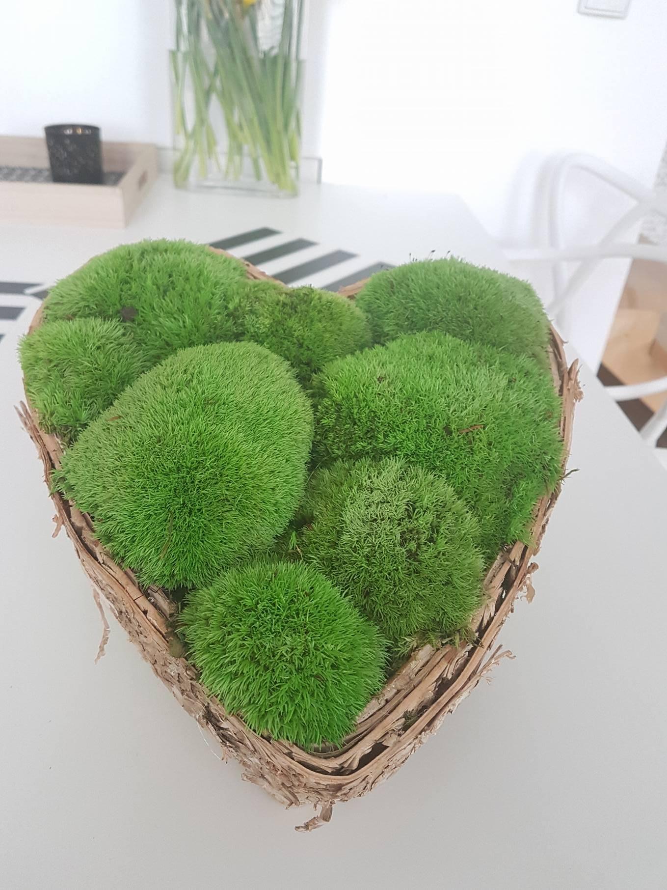 Mech Naturalny Zielone Sciany Jedyne Na Allegro 6882072027