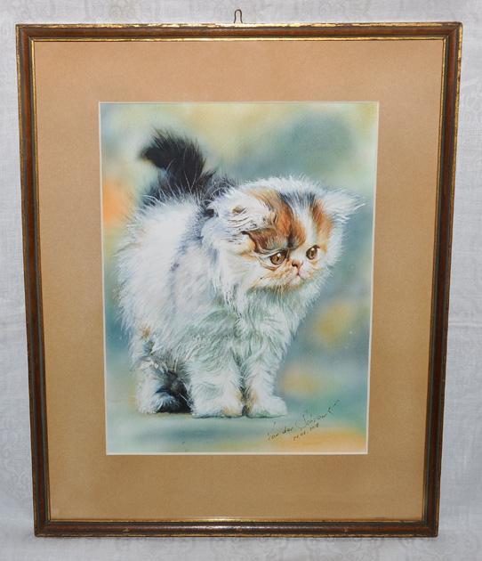 Perski Kot Van Der Schvank śliczny Puszek 7341840345 Oficjalne