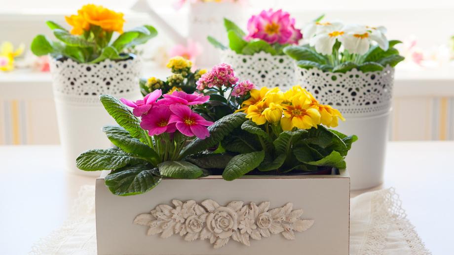 Doniczki Do Kwiatów Najciekawsze Rozwiązania Allegropl