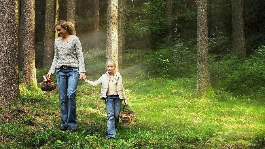 GPS dla grzybiarzy, czyli jak odnaleźć się w lesie