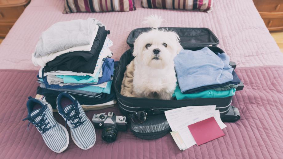 Pies na wakacjach — o czym powinniśmy pamiętać?