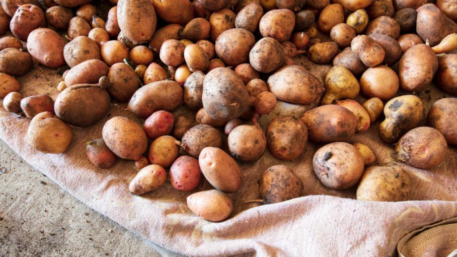 dde9d048921f73 Przechowywanie warzyw zimą - jak to robić? - Allegro.pl
