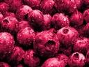 Różowa Borówka Amerykańska Pink Lemonade NOWOŚĆ