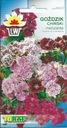 GOŻDZIK CHIŃSKI MIESZANKA ciekawe różnobarwne