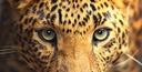 Fototapeta FLIZELINOWA na wymiar | KLEJ GRATIS Motyw Dekor Dziecięce Kuchenne Litery i cytaty Motywy roślinne Motywy zwierzęce Nowoczesne Orientalne Postacie Sport Tribal