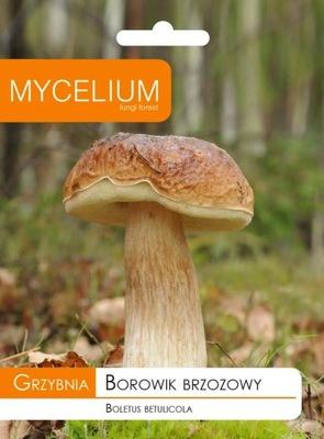 МИЦЕЛИЙ белый ГРИБ БЕРЕЗОВЫЙ, белый гриб Грибы лесные
