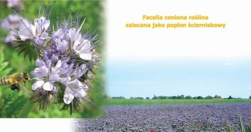 Facelia BŁĘKITNA POPLONY EKO nawóz ZIELONY!!!